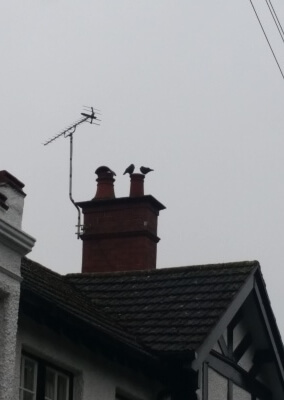 Chimney Sweep, Birds Nest Removal - Hagley, Stourbridge West Midlands.
