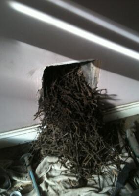 Chimney Sweep, Birds Nest Removal - Kingswinford, West Midlands.