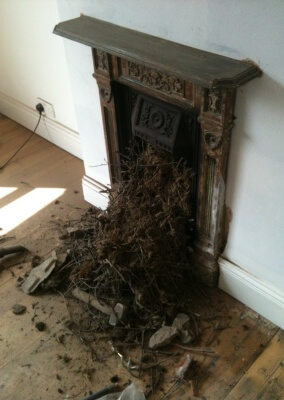 Chimney Sweep, Birds Nest Removal Stourbridge, West Midlands.